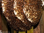 The Honey Factory!!