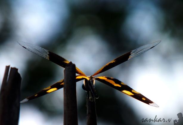 Dragonfly!!!
